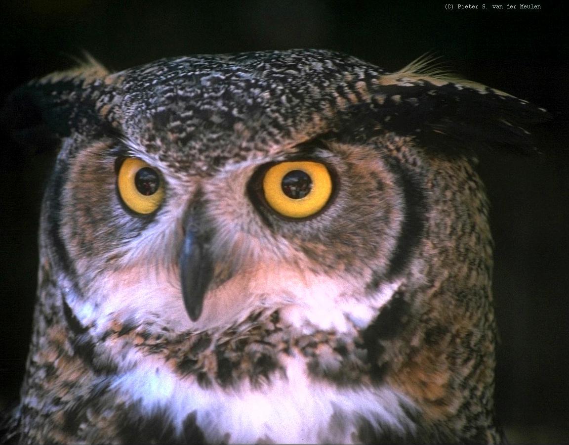 http://waiohuli.com/owl-face.jpg